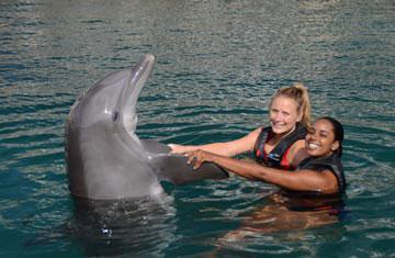 Dolphin Quest Bermuda