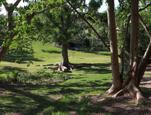 Bermuda Arboretum
