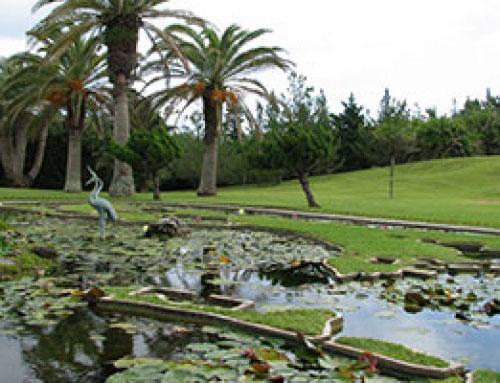 Palm Grove Gardens