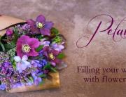 petals-blog-header-2