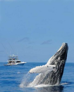 Bermuda-Whale-Watching