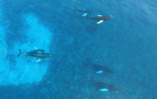 Whale Watching in Bermuda