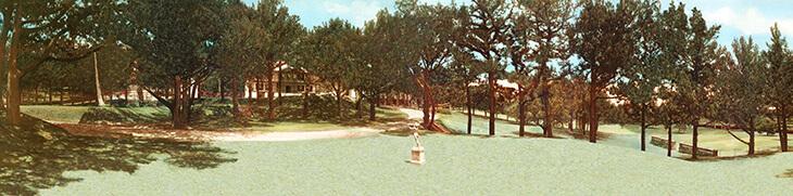 Do you know about Juniperus Bermudiana - Bermuda's national tree?