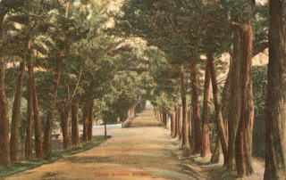 Do you know about Juniperus Bermudiana- Bermuda's National Tree?