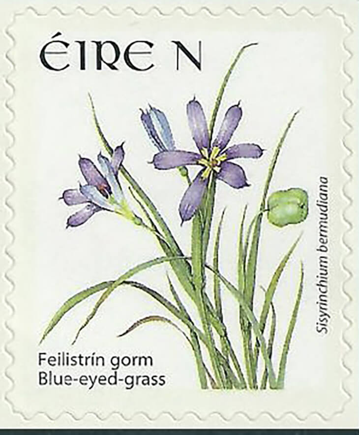 Do You Know About Bermuda's National Flower and Ireland's National Rate Postage Stamp?