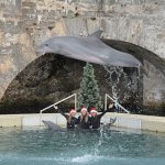 Christmas at Dolphin Quest